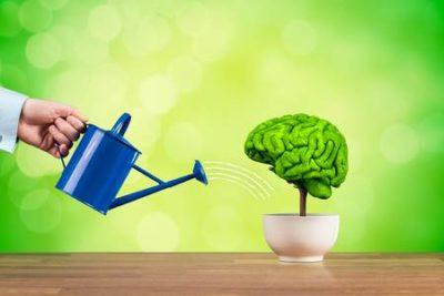 Uma planta em forma de cérebro sendo regada com agua