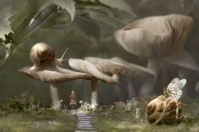 figura abstrata e visual com cogumelos e caracois