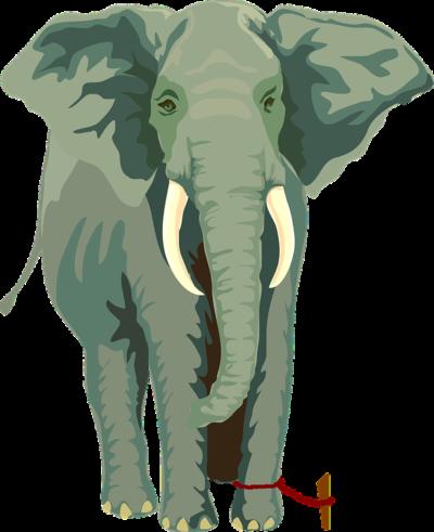 elefante preso com barbante em galho preso ao chão