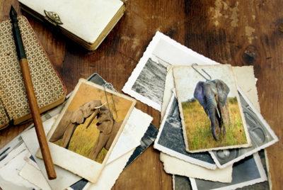 Como Vencer a Dificuldade de Memorização e ter uma memória de elefante