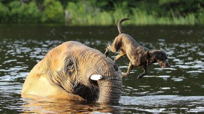 como ter uma verdadeiramemória de elefante