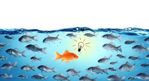 peixe com cor chamando atenção no meio de outros normais