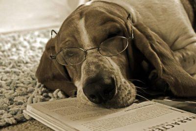 cão intelectual com pouca memória de trabalho