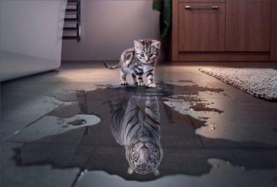 gato enxergando reflexo de um tigre na poça de agua