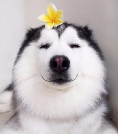 cachorro com olhos fechados e contente